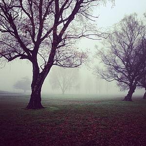 дерева, Туманний, туманні, туманні, Містик, ліс, взимку