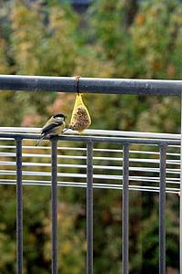 врабче, птица, храна, животните, природата, затвори, птици