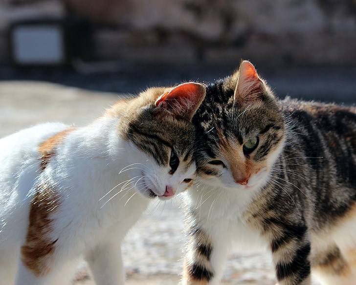 katt, gosig, Söt, kattunge, Kitty, lekfull