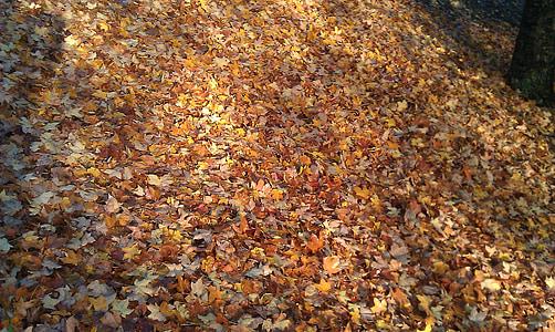 φύλλα, φύλλο, πτώση, το φθινόπωρο, φθινοπωρινά φύλλα, Χρυσή φθινόπωρο, πτώση των φύλλων