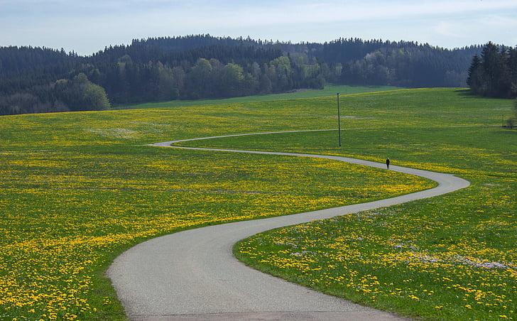 landscape, flower meadow, scale, away, meadow, spring meadow, spring