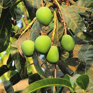 φρέσκο μάνγκο, Dharwad, Ινδία, φρούτα, ζουμερά, τροφίμων, ώριμα