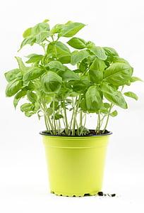 basilic, brousse basilic, pot de basilic, fines herbes, herbes culinaires, Mediteran, Italien