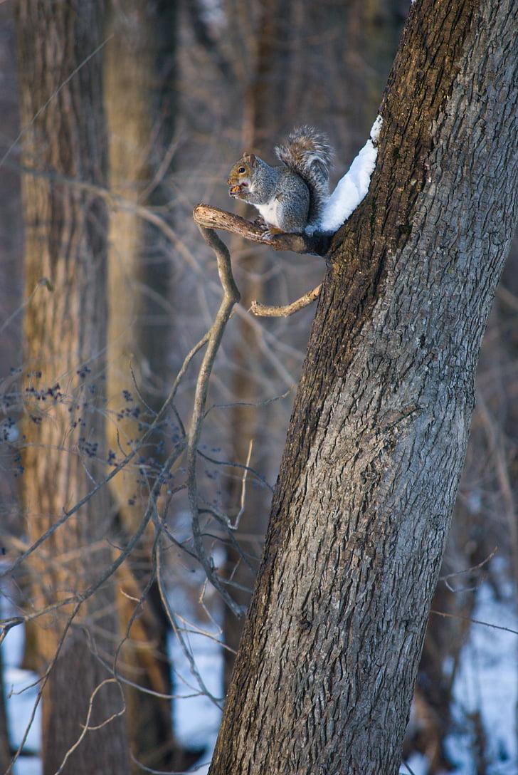 zrele slike vjeverica