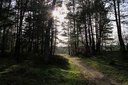 camí del bosc, carril, bosc, torna la llum, distància, Sunbeam, estat d'ànim