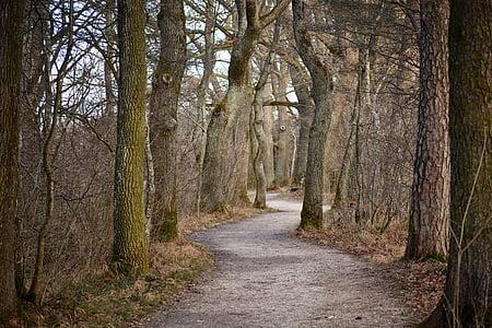 suite, Avenue, arbres, chêne, nature, avenue bordée d'arbres, chemin forestier
