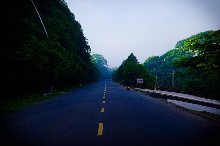 treet, Alba, Vietnam, nebbia, foresta