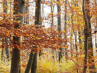 Sonbahar, yeşillik, doğa, Orman, sonbahar renkleri, Sezon, yaprakları