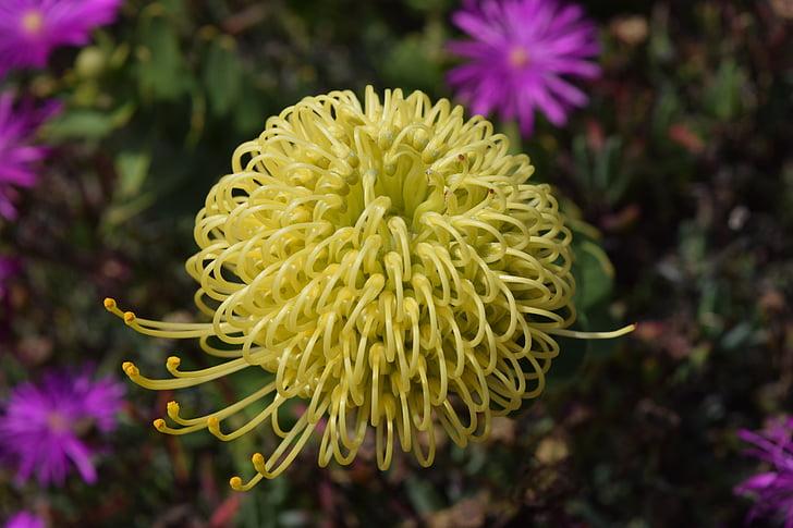 flower, wild flower, yellow flower