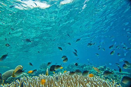 zemūdens, mazo zivju, koraļļu, tropu, Widi salas, Halmaheras, Indonēzija