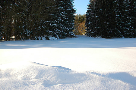 winter, snow, forest, wintry, cold, snowy, white