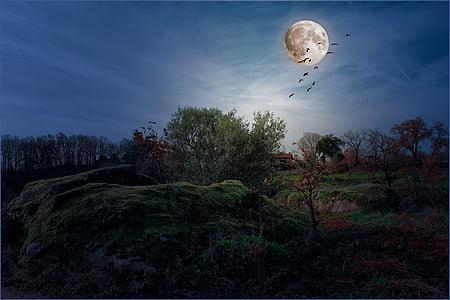 landskap, månen, natt, fullmåne, himmelen, himmelen og månen, månens overflate