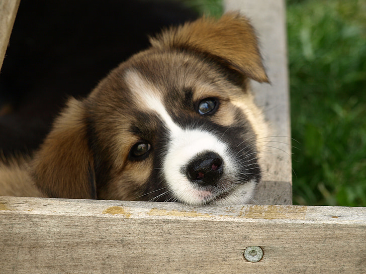 dog, puppy, dog's nose, young dog, cute, face, snout