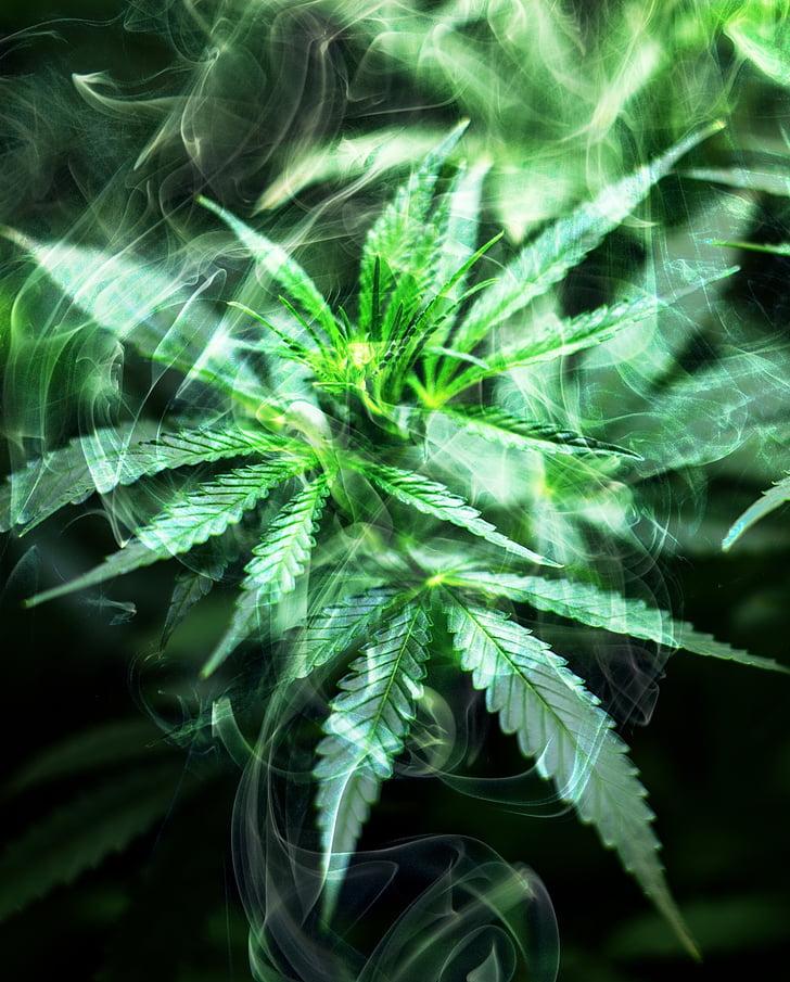 З марихуана картинки кур для конопляное семя