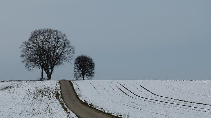 pozimi, drevo, sneg, pozimi dreves, narave, razpoloženje, zimski