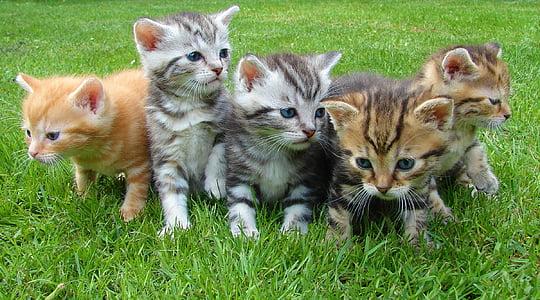 котенца, котка, puppy котка, Ръш, плувка, коте, щастлив котка