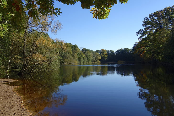 lake, pond, nature, landscape, water, trees, forest