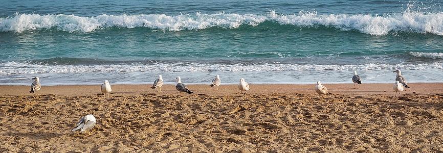 sirályok, tenger, táj, tengerpart, seevogel, madár, víz