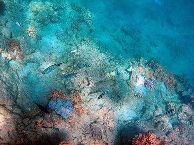 sota el mar, Mar profund, peix, oceà, profund, aquàtiques, nedar