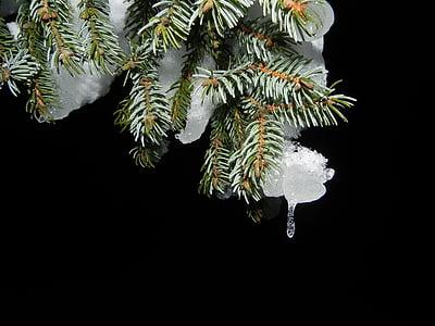 fir, snow, night, christmas, snow white, cold, tree