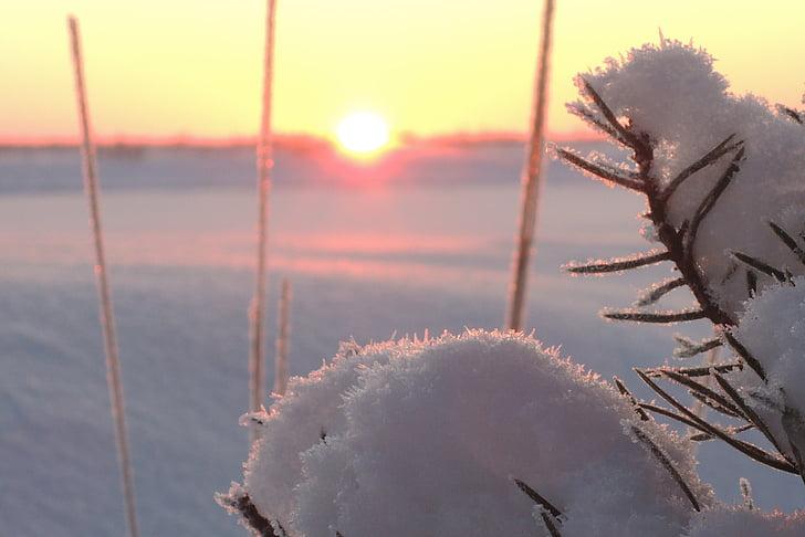 snow, winter, sun, sunset