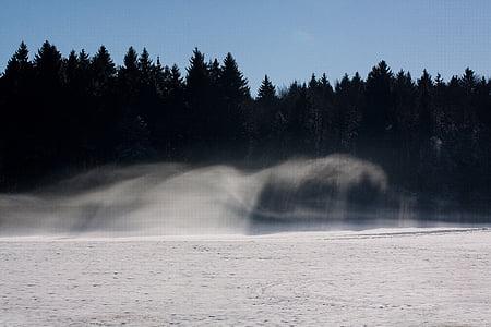 forest, fir forest, fog, resolution, scan, snow, shadow