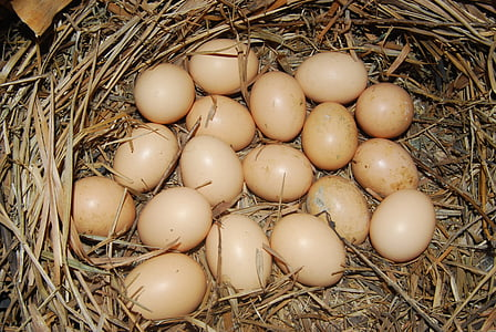 ous, pollastre, proteïna, ous marrons, cuina, Nutrició