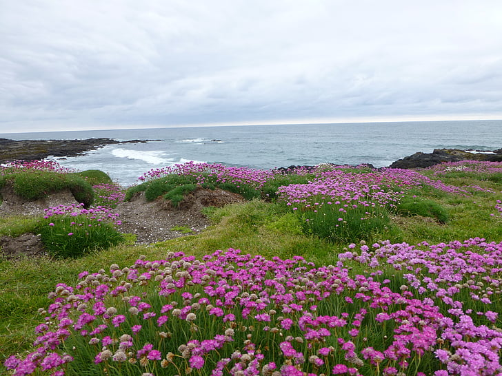 lilled, roosa, Ocean, yachats oregon, Vaikse ookeani rannikul, pilved, rannikul