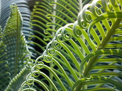 close-up, fotografia, Falguera, planta, diürna, verd, Palma