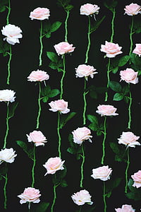 color de rosa, flor, rosas rosadas, naturaleza, fondos, patrón de, planta