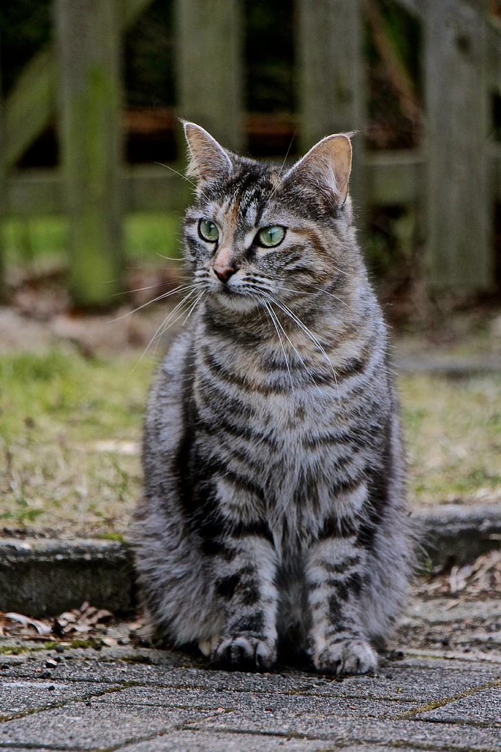 cat, fur, grey, eyes, green, green eyes, domestic cat
