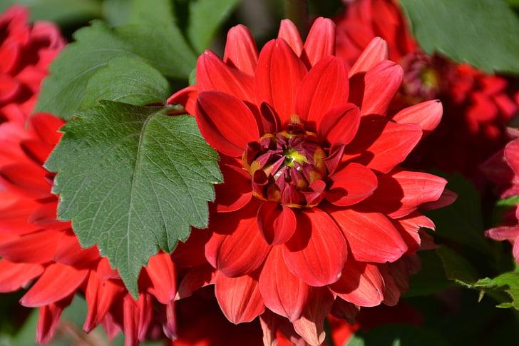 Cveće - Page 21 Flower-red-love-garden-preview