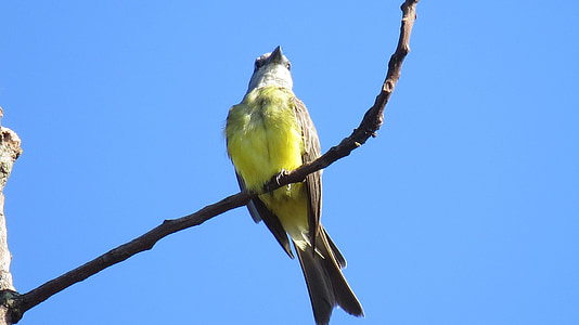 birds, birdie, bird