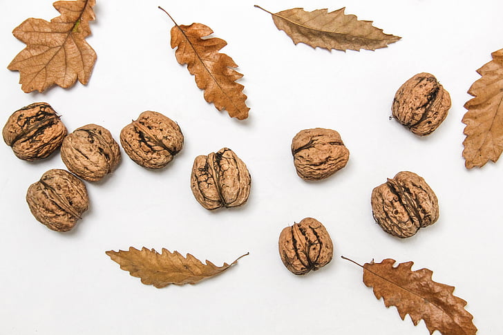 Zbirka, suha, suho lišće, jesen, lišće, orah, Ukratko