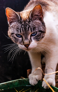 animals, cat, portrait of cat, feline