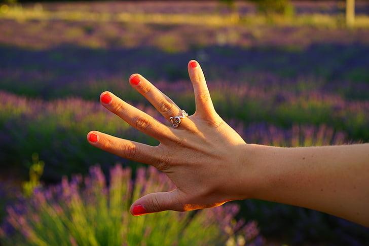 hand, vinger, vinger ring, liefde, rood geschilderd, gelakt, rood