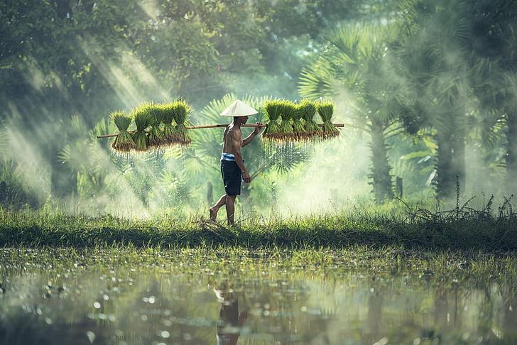 l'agricultura, Àsia, Cambodja, gra, nens, el país, cultivar