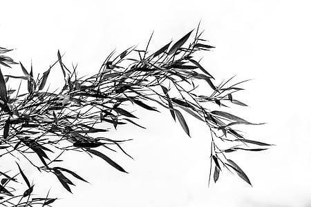 bambú, herba, plantes de bambú, grasartig, lluminós, petita, Corona de fulla