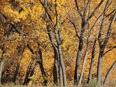 πτώση, το φθινόπωρο, σεζόν, Κίτρινο, πορτοκαλί, φύλλο, κόκκινο