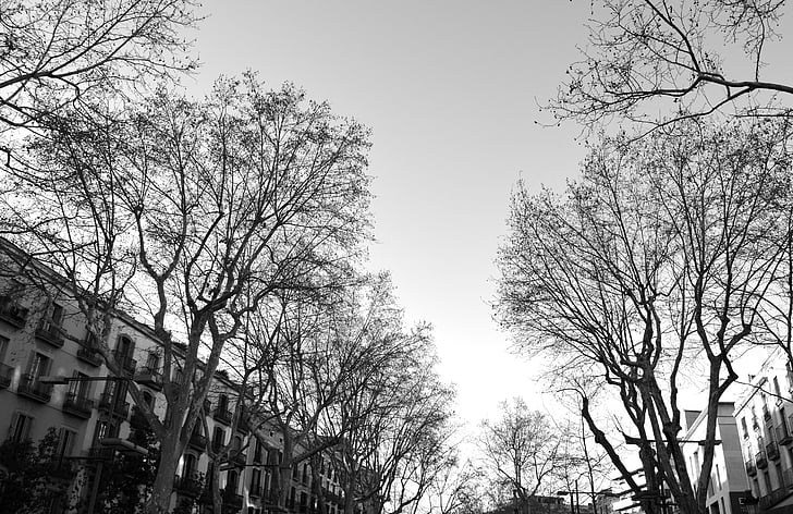 ramblas, street, barcelona, black and white, autumn, winner, trees