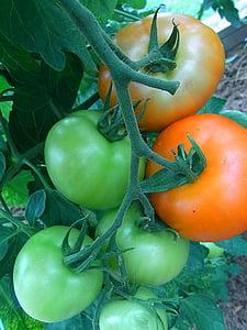 tomàquets, fruita, verdures, jardí, aliments, Nutrició, Sa