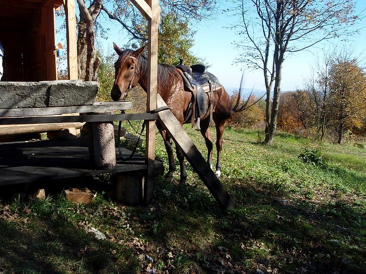 con ngựa, chuyến đi, Thiên nhiên