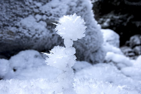 ice flowers, eiskristalle, white, frost, ice, crystals, cold