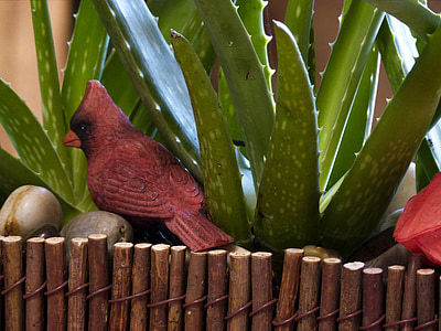 cactus, plant, birds, red, decoration, close-up, nature