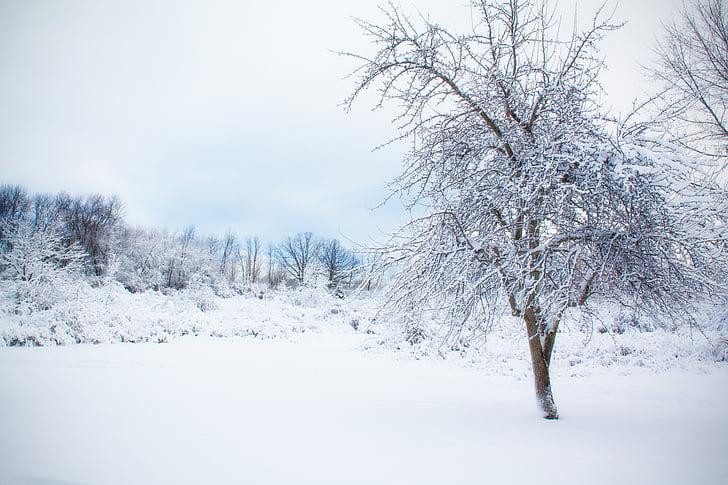 zasneženih drevo, sneg, pozimi, krajine, zunanji, bela