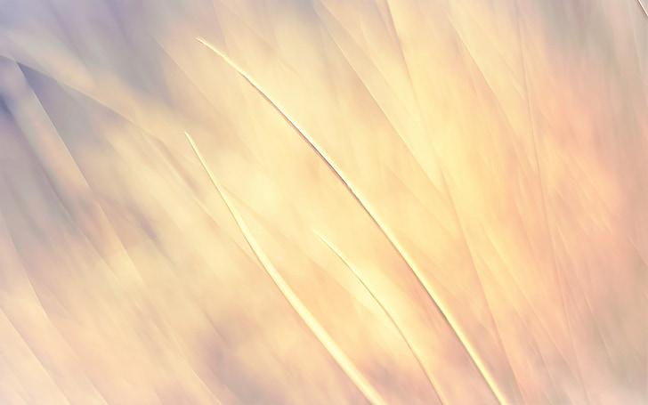 Пшеница, Справочная информация, желтый, стена, Структура