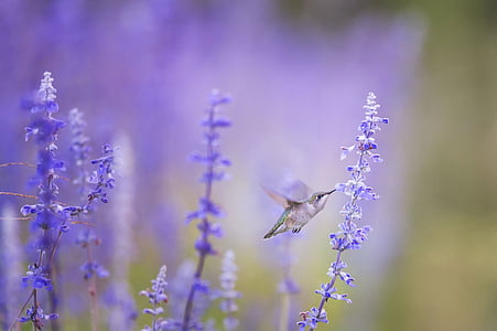 animal, bird, bloom, blossom, flora, flowers, hummingbird