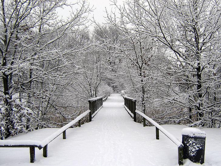 talvel, lumi, talvistel, Talv, lumine, Talvine mets