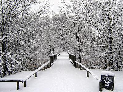 Zimní, sníh, Zimní, Zimní sen, zasněžené, zimní les