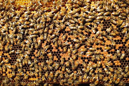 abelles, fons de la naturalesa, lideratge, empresa, reunió de negocis, contingut, negoci de reunió